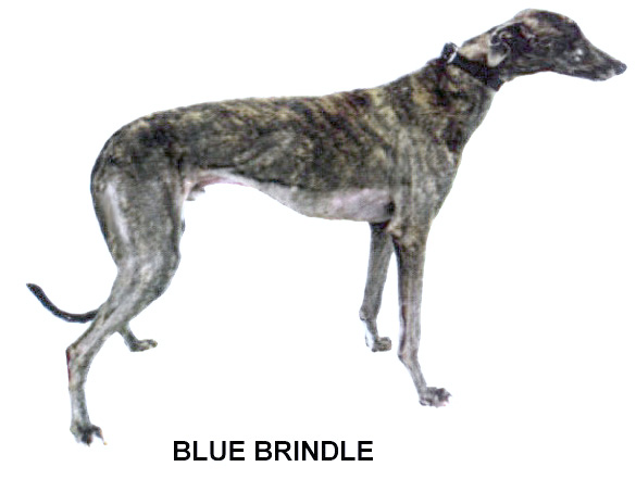 Greyhound Color Chart