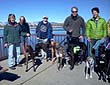 Greyhound Walking Club - photo 1.
